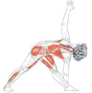 low back pain tw mar 16