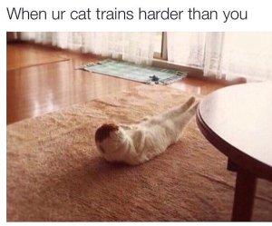 when ur cat tw maar 16