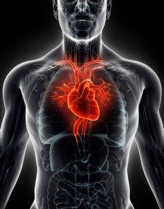 harv helth heart tw 16516