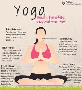 harv yoga tw 6516