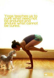 yoga gaba tw 15516