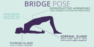 bridge pose tw 12716