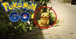 physio pokemon tw 16716